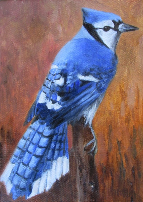 """Blue Jay"" original fine art by Ruth Stewart"