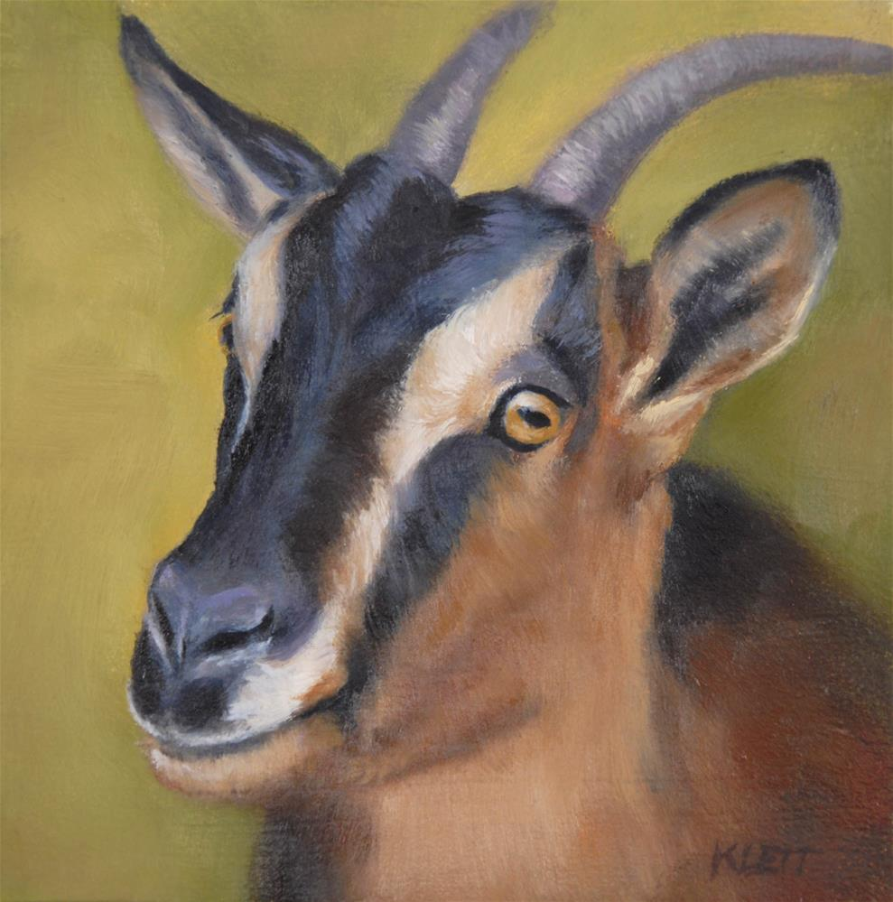 """Goat Face"" original fine art by Tracy Klett"