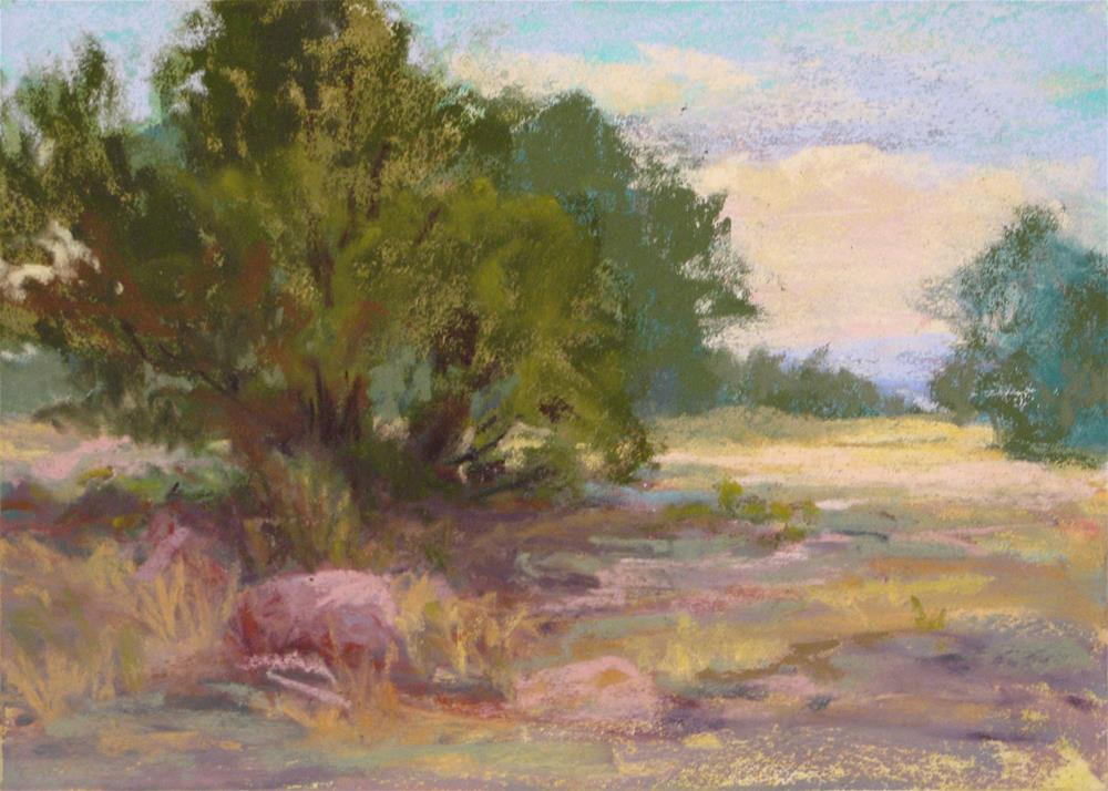 """Sandia Cedar"" original fine art by Marsha Savage"