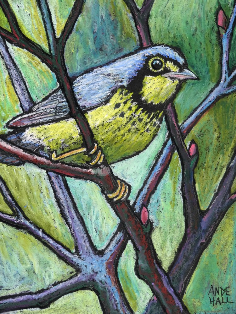 """Canada Warbler"" original fine art by Ande Hall"
