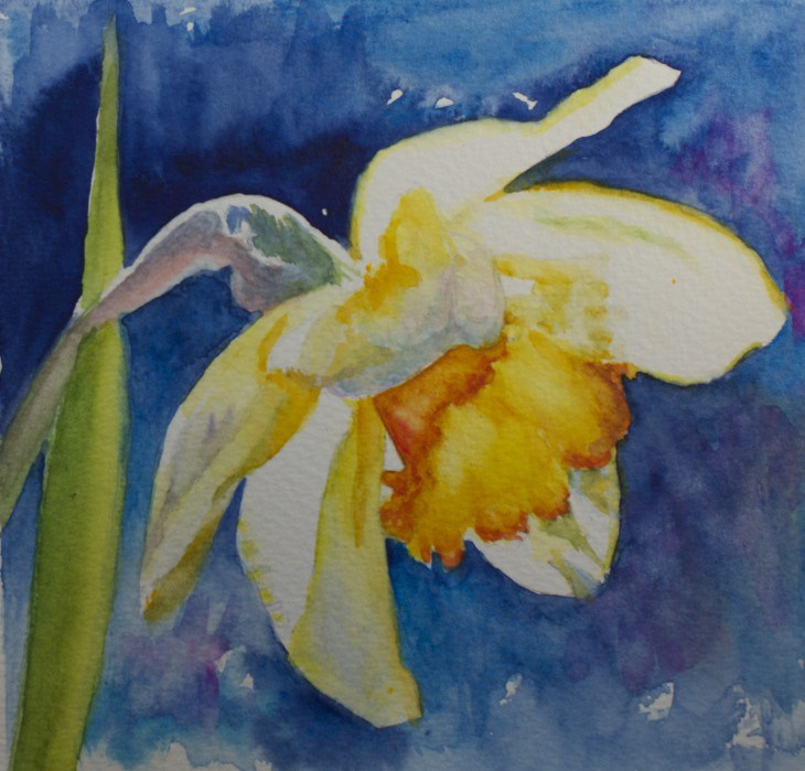 """Spring Daffodil"" original fine art by Sue Churchgrant"