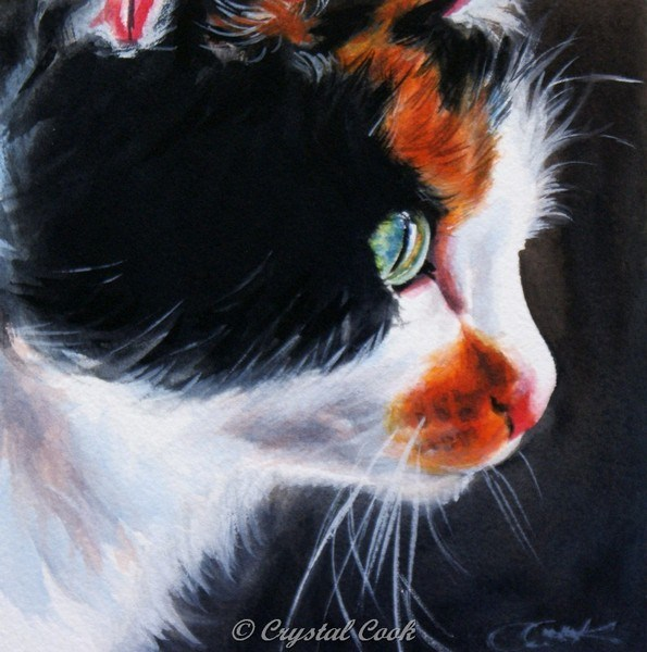 """Kitty Windows"" original fine art by Crystal  Cook"