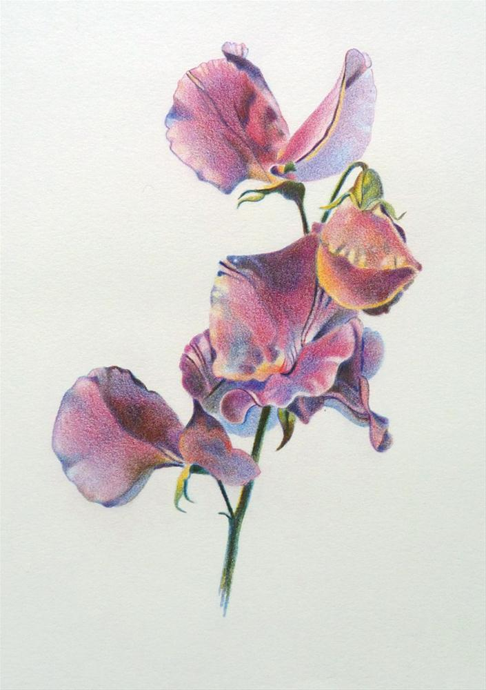 """Sweet Pea"" original fine art by Barbara Benedetti Newton"