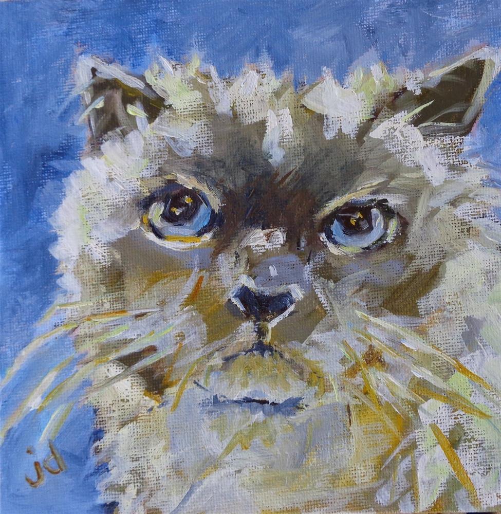 """""""The look"""" original fine art by Jean Delaney"""
