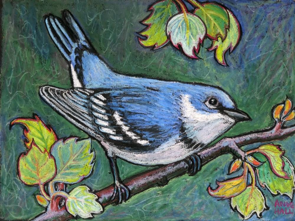 """Cerulean Warbler"" original fine art by Ande Hall"