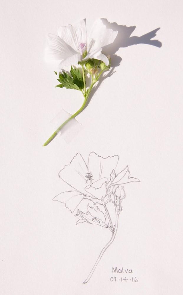 """Climbing Roses and Malva"" original fine art by Debbie Lamey-Macdonald"