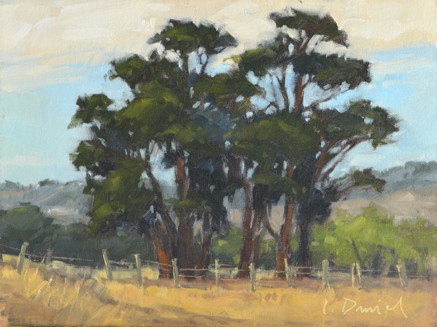 """Towering Eucalyptus"" original fine art by Laurel Daniel"