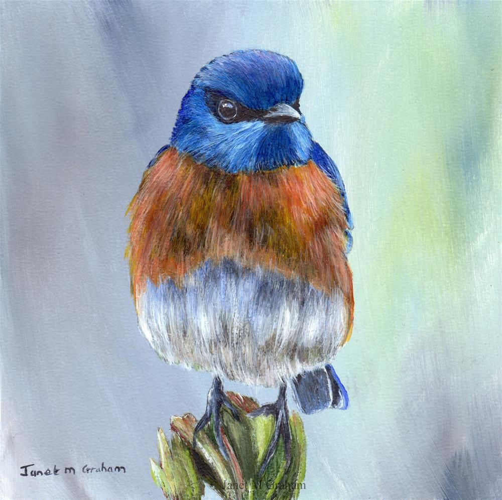"""Western Bluebird"" original fine art by Janet Graham"