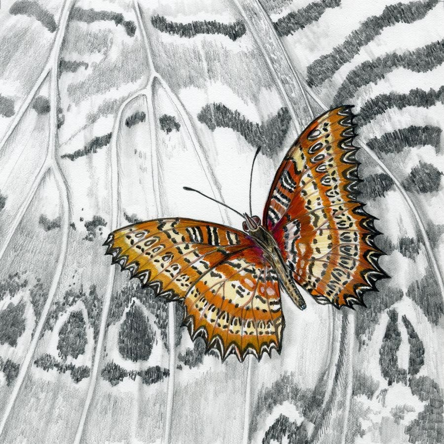 """Nature Fine Art Painting, Insect LACEWING BUTTERFLY The Art of Nature, Fine Art by Mindy Lighthipe"" original fine art by Mindy Lighthipe"