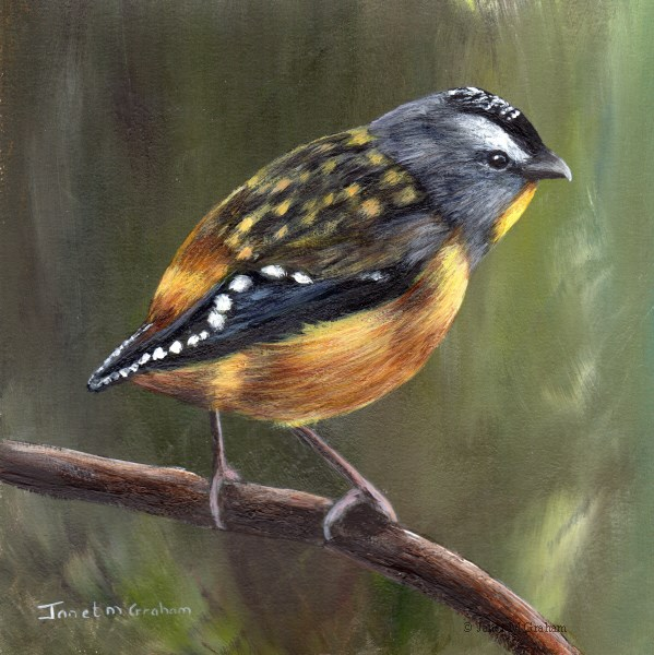 """Spotted Pardalote No 2"" original fine art by Janet Graham"