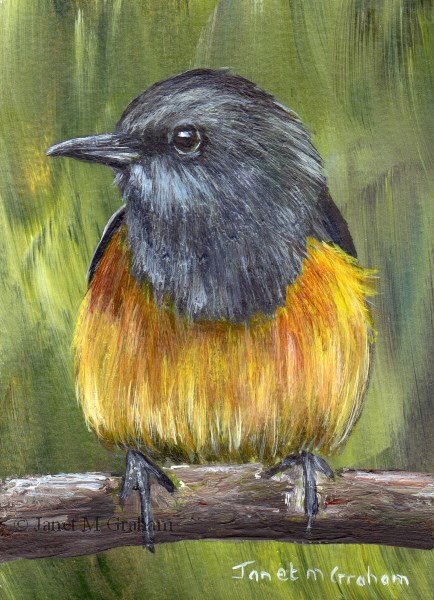 """Little Rock Thrush ACEO"" original fine art by Janet Graham"