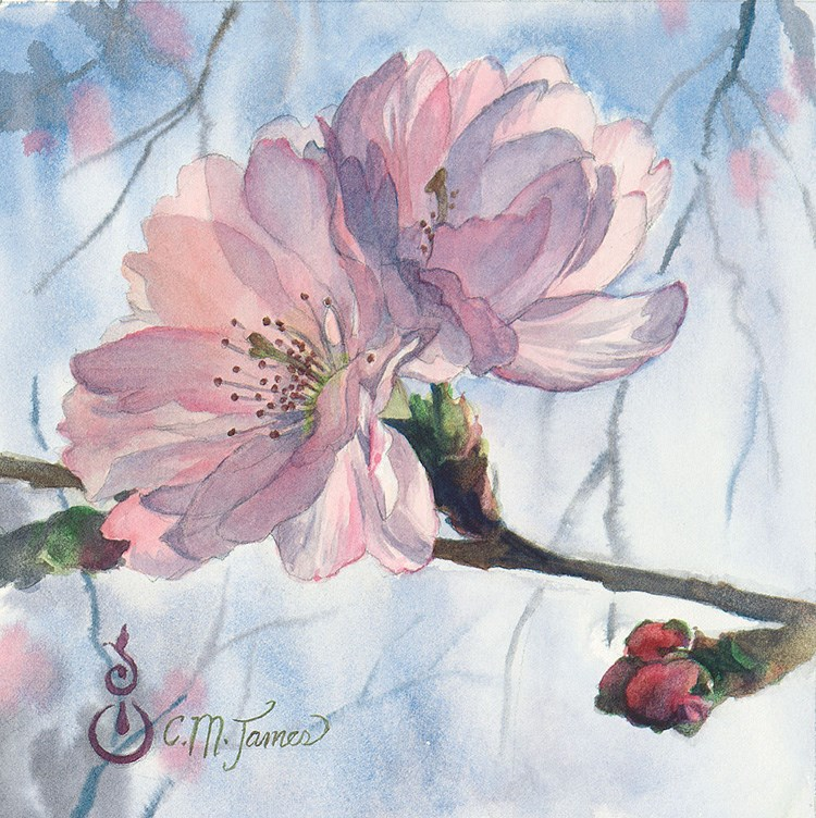 """Cherry Blossom Duet"" original fine art by Catherine M. James"