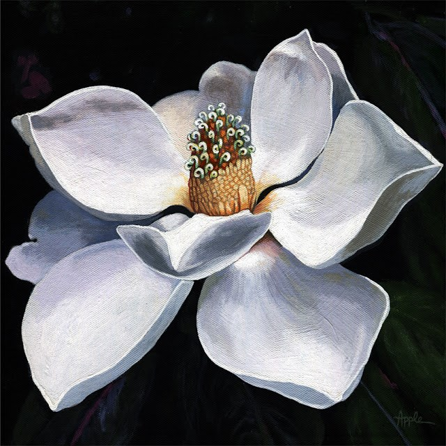"""Magnolia summer realistic flower painting nature still life"" original fine art by Linda Apple"