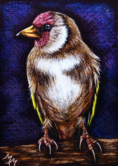 """Finch - SA95"" original fine art by Monique Morin Matson"