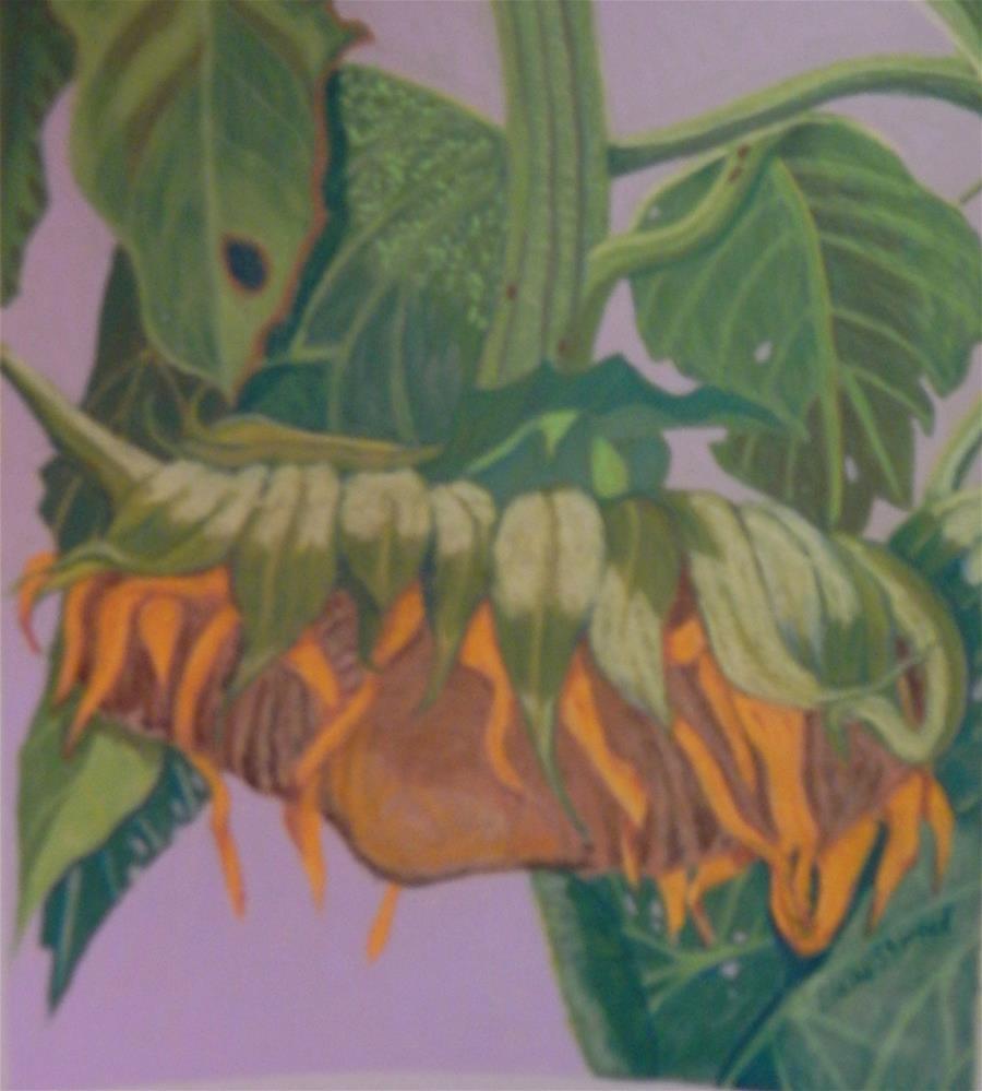 """""""Sunstruck Sunflower"""" original fine art by Elaine Shortall"""