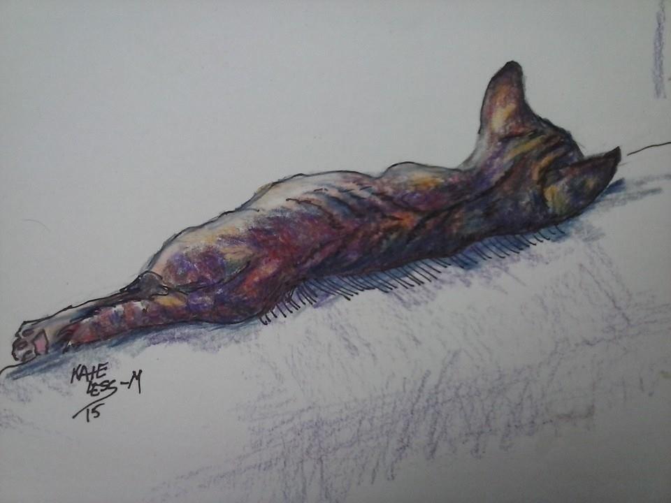 """""""Kitten Comfort"""" original fine art by Kate Less-Madsen"""