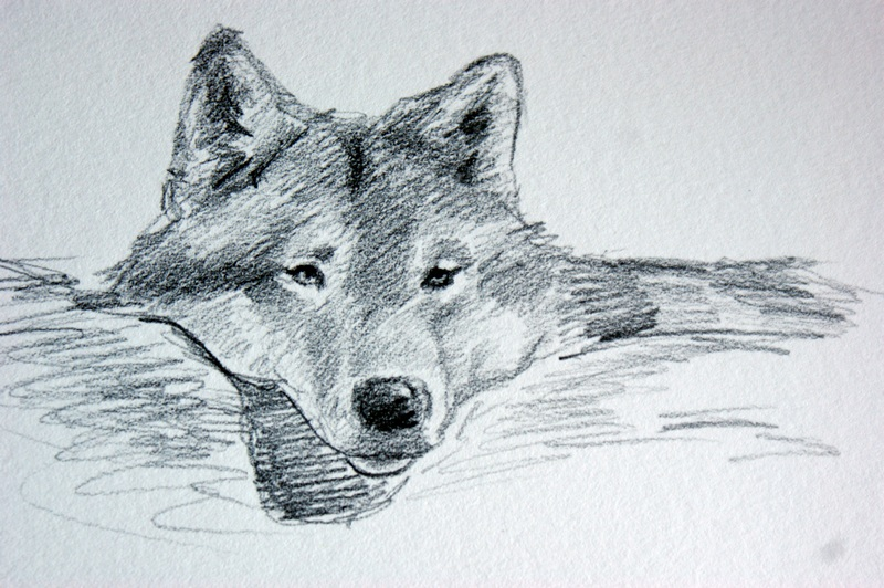 """Snuggle, Wolf Study #2"" original fine art by Crystal Cook"