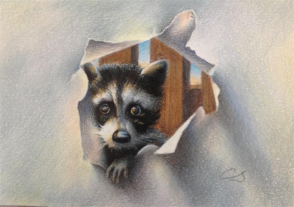 """Baby Racoon"" original fine art by Claudia Selene"