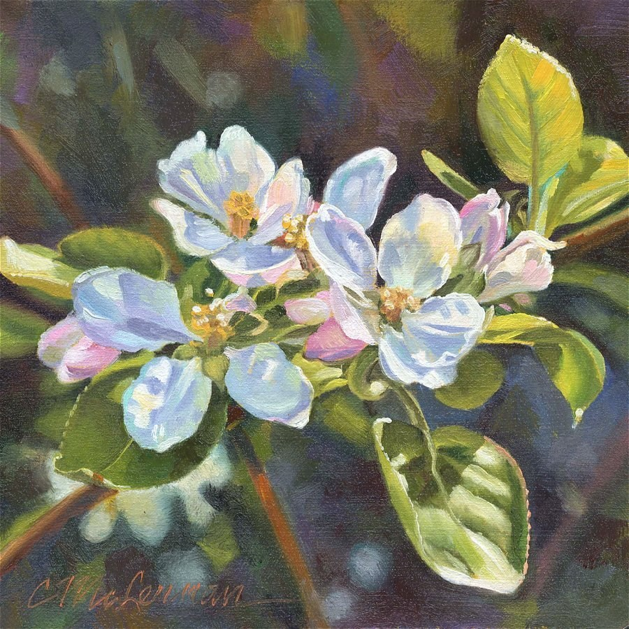 """Apple Blossom Glow"" original fine art by Connie McLennan"