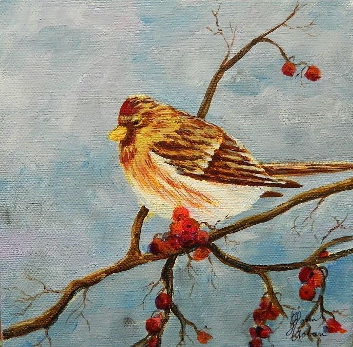 """""""Common Redpole"""" original fine art by Gloria Urban"""