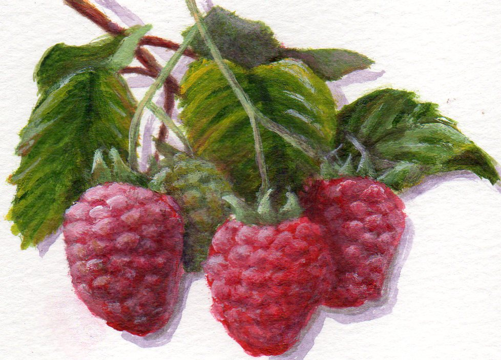 """Ravishing Raspberries"" original fine art by Debbie Shirley"