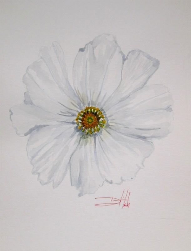 """White Cosmos"" original fine art by Delilah Smith"