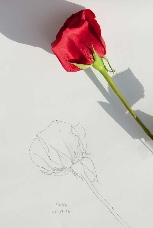 """Daily Sketch– Red Rose"" original fine art by Debbie Lamey-Macdonald"