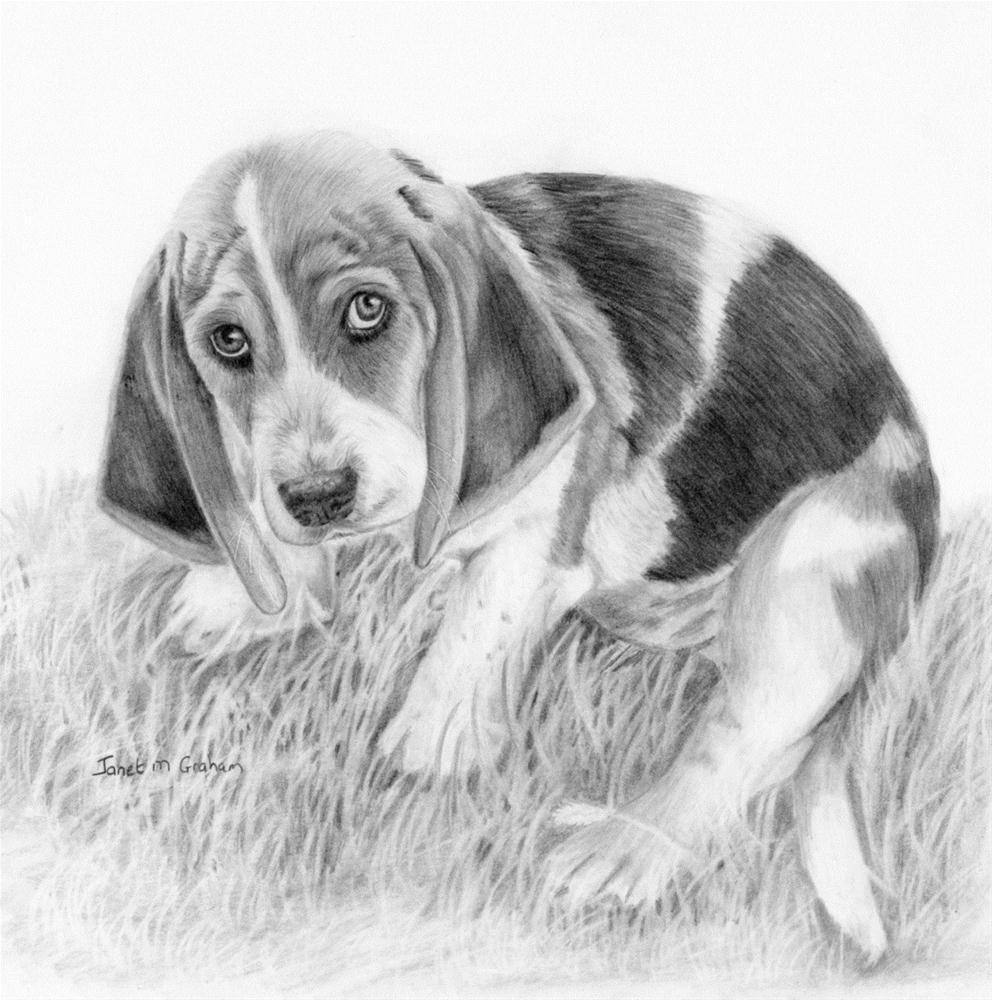 """Basset Hound - What did I do"" original fine art by Janet Graham"
