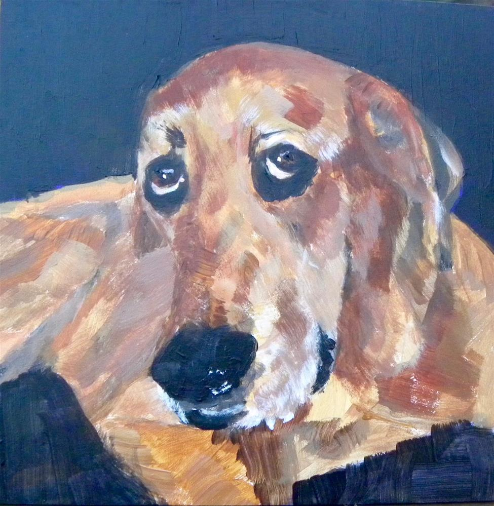"""Louie"" original fine art by cheryl buhrman"