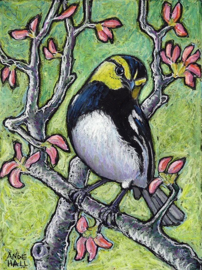 """Golden-Cheeked Warbler"" original fine art by Ande Hall"