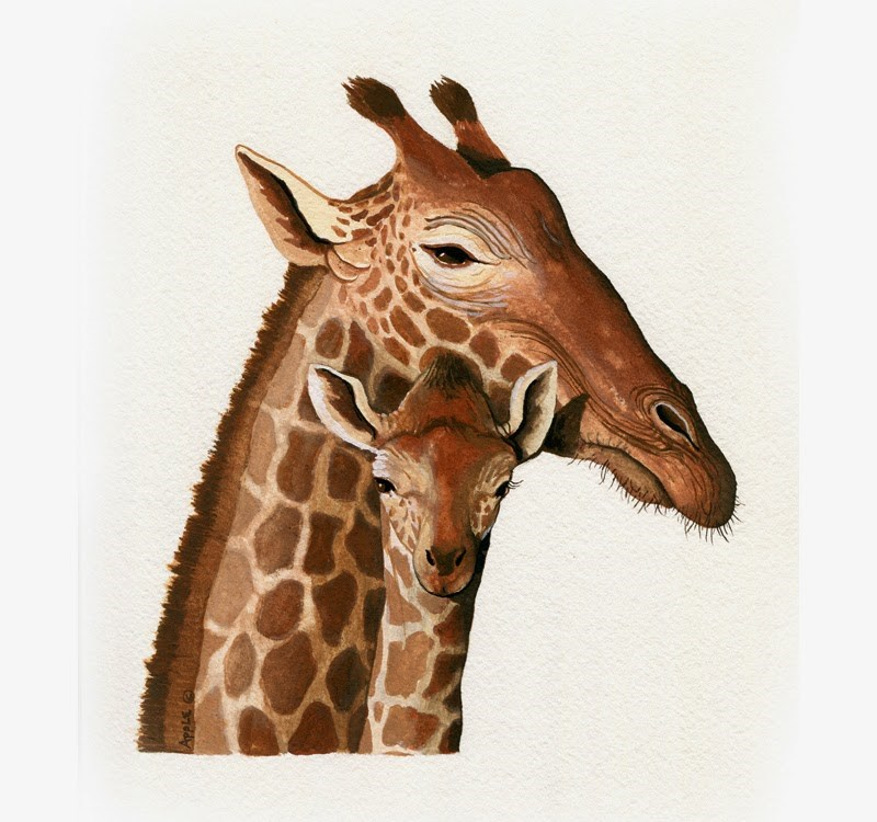 """Giraffe - realistic illustration wildlife painting"" original fine art by Linda Apple"