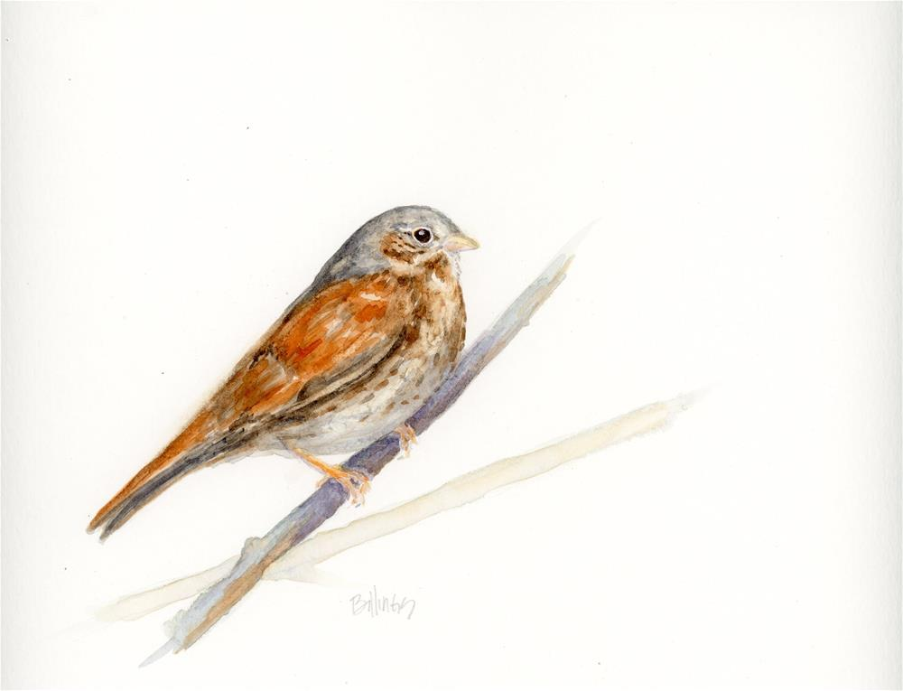 """Sparrow Study VII"" original fine art by Susanne Billings"
