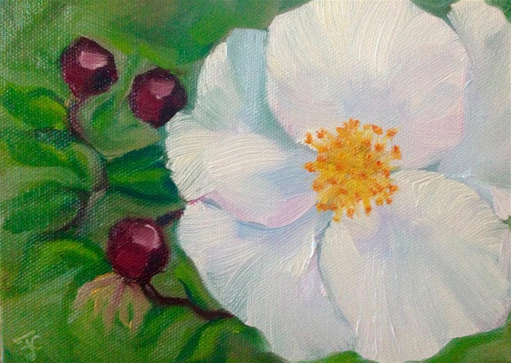 """Final Bloom"" original fine art by Bobbie Cook"