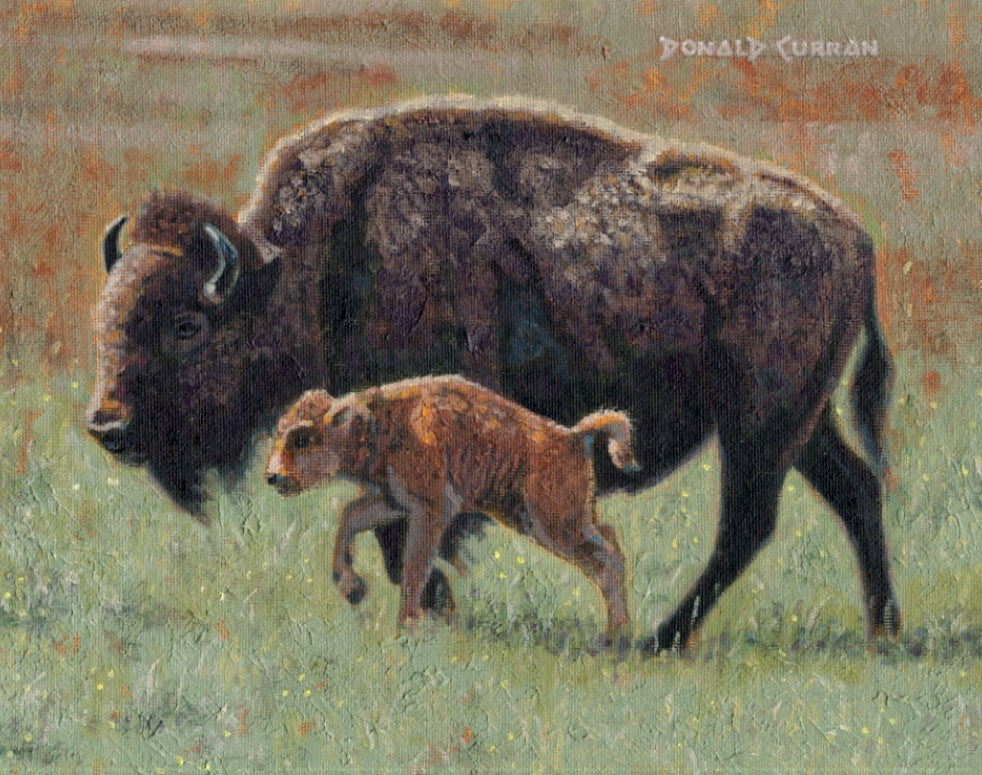 """Buffalo"" original fine art by Donald Curran"