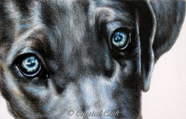 """Icy Eyes"" original fine art by Crystal Cook"