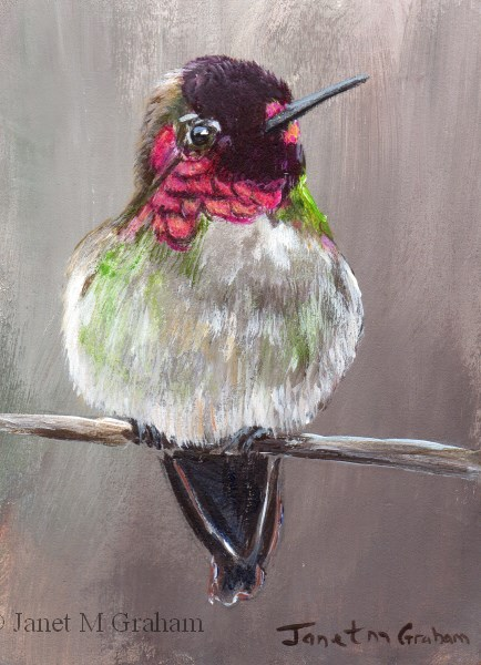 """Anna's Hummingbird ACEO"" original fine art by Janet Graham"