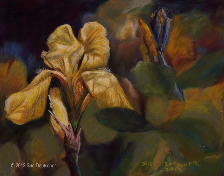 """""""Yellow Iris"""" original fine art by Sue Deutscher"""