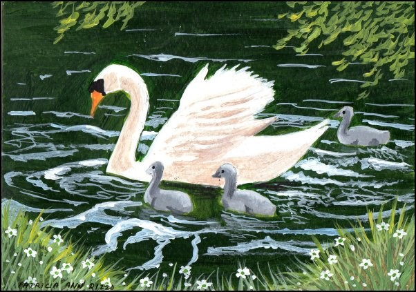 """Swan and Cygnets"" original fine art by Patricia Ann Rizzo"