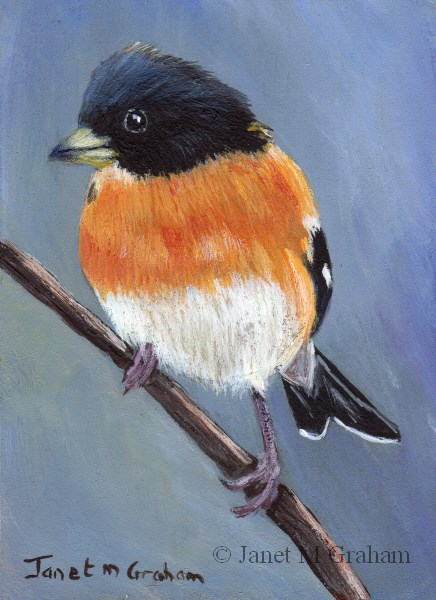 """Brambling ACEO"" original fine art by Janet Graham"