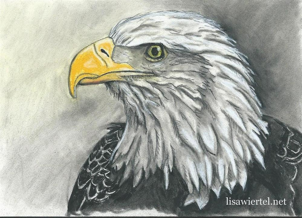 """Bald Eagle #1"" original fine art by Lisa Wiertel"