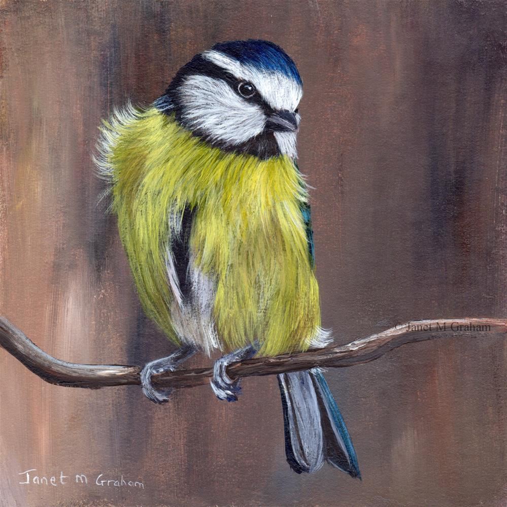 """Blue Tit No 4"" original fine art by Janet Graham"