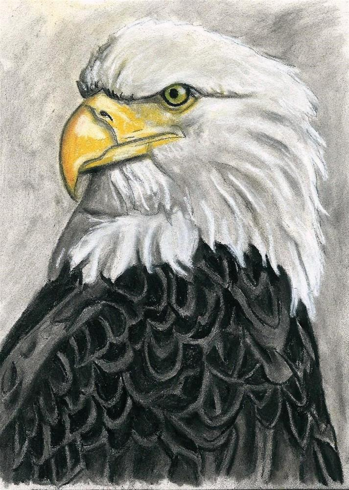 """Eagle Study #2"" original fine art by Lisa Wiertel"