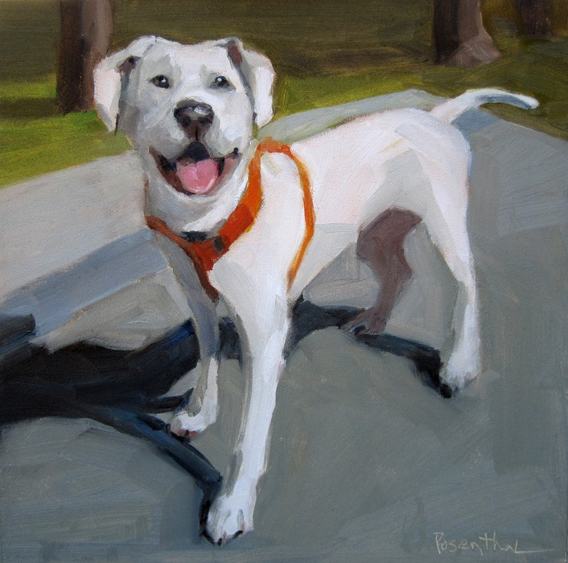"""White Dog with Red Harness"" original fine art by Robin Rosenthal"