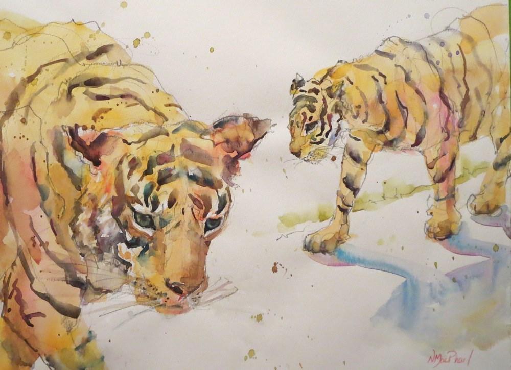 """tiger studies"" original fine art by Nora MacPhail"