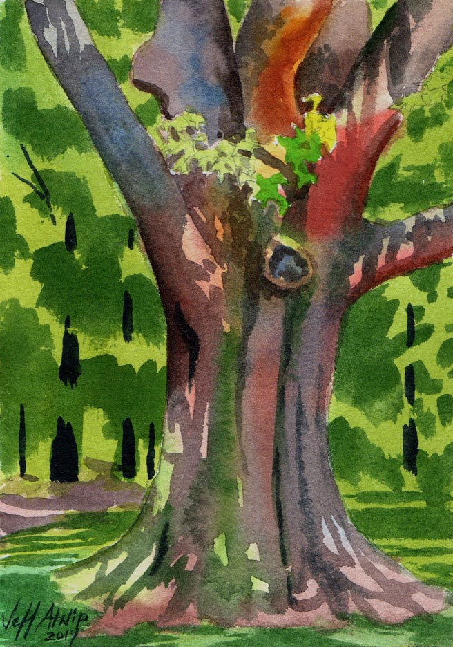 """Big Red Oak"" original fine art by Jeff Atnip"