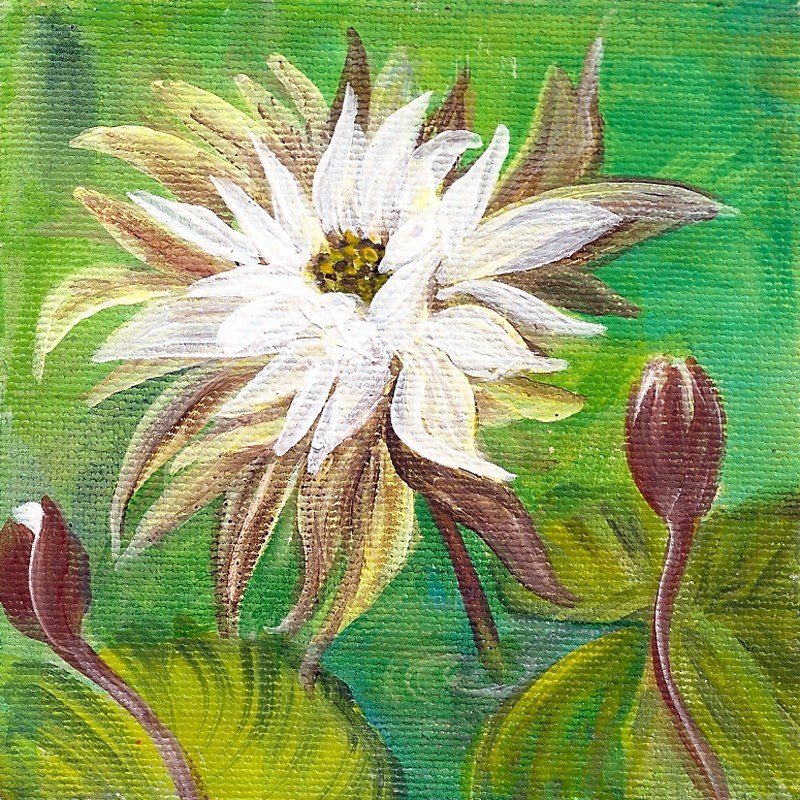 """4x4 square edge canvas: Water Lillies"" original fine art by Penny Lee StewArt"