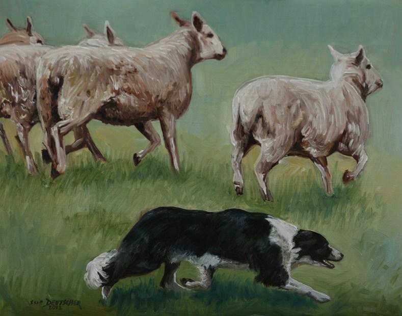 """""""Border Collie Herding Sheep"""" original fine art by Sue Deutscher"""