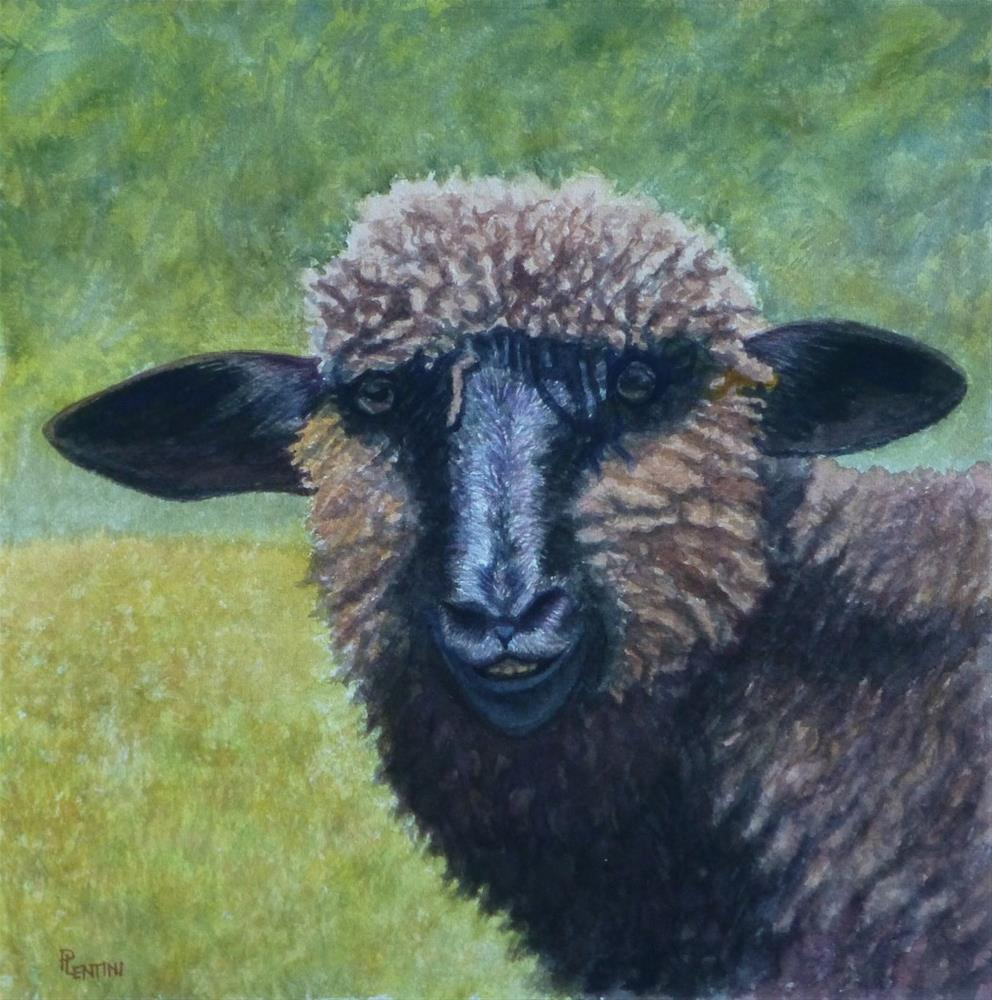 """Sheep Series 1: Dark Eyes"" original fine art by Peter Lentini"