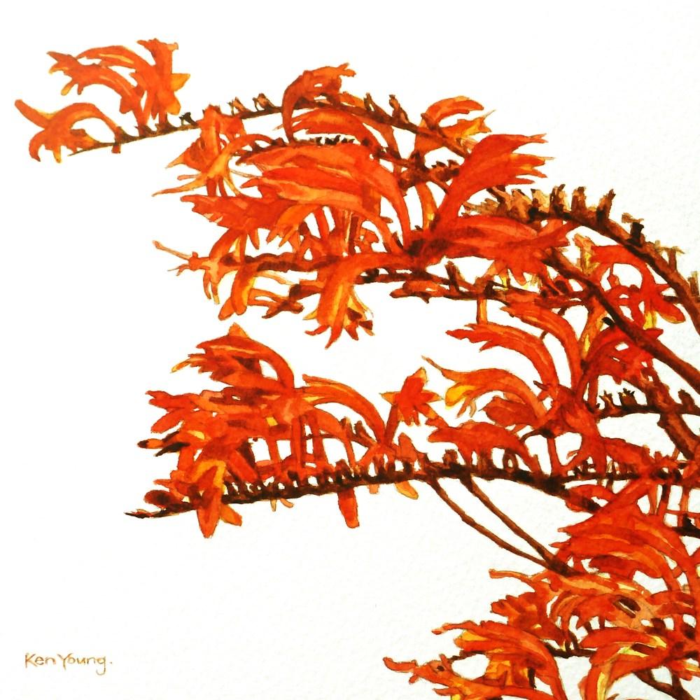 """Crocosmia"" original fine art by Ken Young"