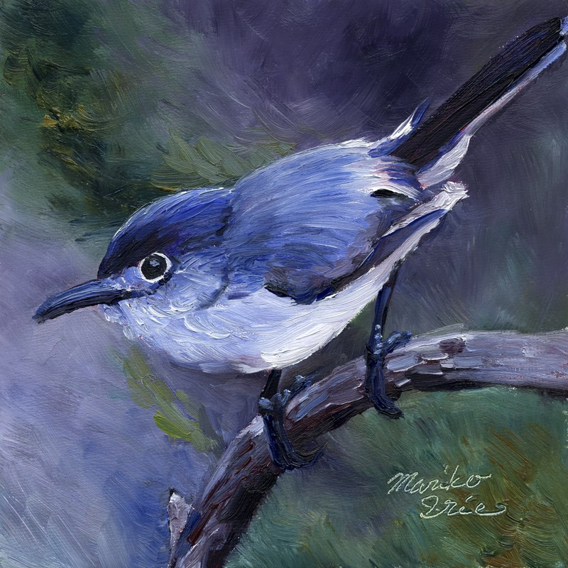 """Blue-gray Gnatcatcher"" original fine art by Mariko Irie"